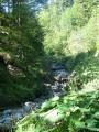 Oberbayern Schliersee Radltour durch den Wald Fereinwohnungen Priller 4 Sterne
