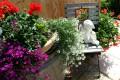 Schliersee Ferienwohnung für 2 Pers Erleben Sie eine intakte Natur in unserem Garten